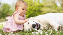 Baby-playing-with-a-dog
