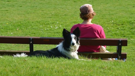 border-collie-1541852_960_720